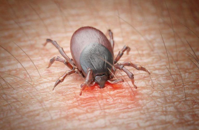 Quel test fiable pour la maladie de Lyme ?